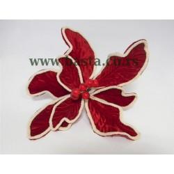Cvet euforbija plis 3750