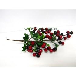 V.grana crvene bobice 4279