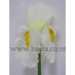V.grana irisa 943