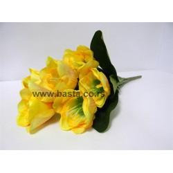 V.b. tulipana 764