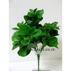 V.b.Zeleni 924