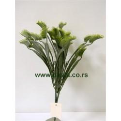 V.b. dionaea 1161 zeleni