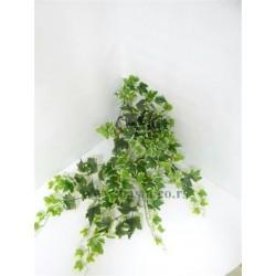 Vestacka puzavica hedera zeleno/zuta 1059