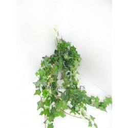 Vestacka puzavica hedera zelena duza 1062